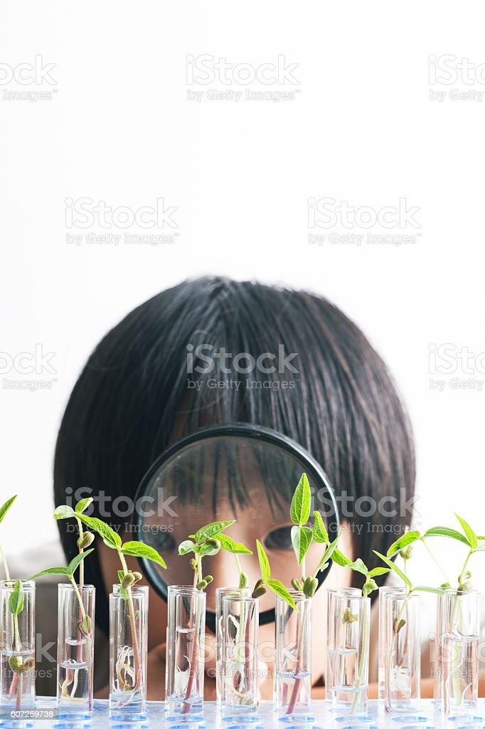 cute girl watchinggreen been sapling  studio shot stock photo
