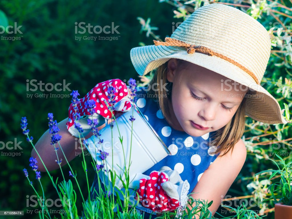 Cute girl watering herbs. Child taking care of plants. Kid with water can. Little gardener with lavender and rosemary. stock photo
