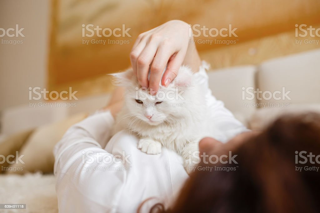 Cute Girl With Curly Hair Hugging White Fluffy Cat Stock Photo Download Image Now Istock