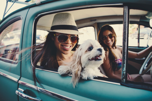 cute girls in vintage car with dog