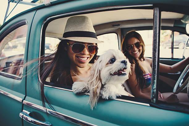 süßes mädchen mit hund im oldtimer - sommer teenagermode stock-fotos und bilder