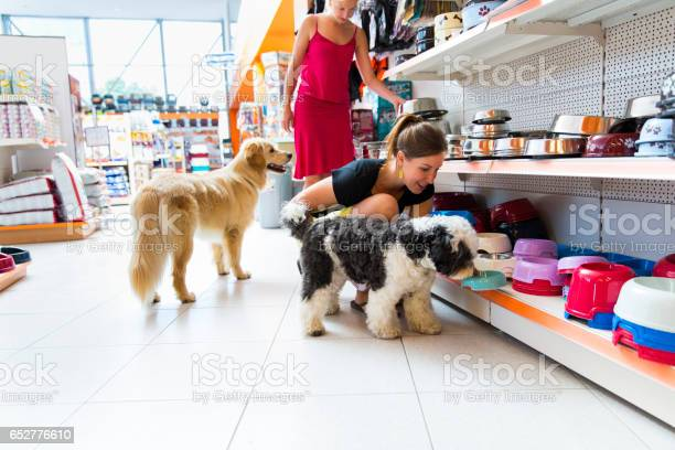 Cute golden retriever and tibetan terrier in pet store picture id652776610?b=1&k=6&m=652776610&s=612x612&h=hi9q1nok9hfw14sr0nf3ndnhufgxofnpu 0xcrpgrmq=