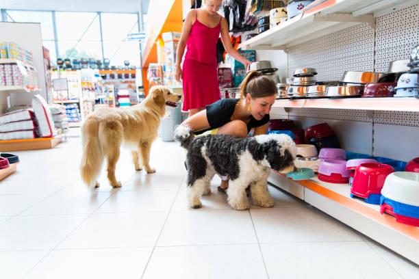 Mignon Golden retriever et Terrier du Tibet en magasin pour animaux de compagnie - Photo
