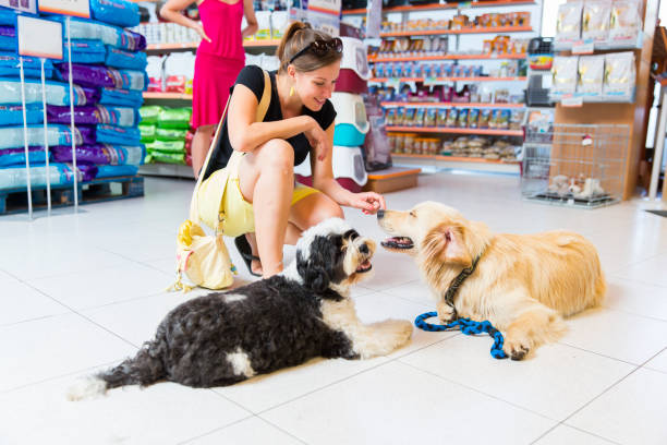 cute golden retriever and tibetan terrier in pet store - pet shop and dogs not cats stock pictures, royalty-free photos & images