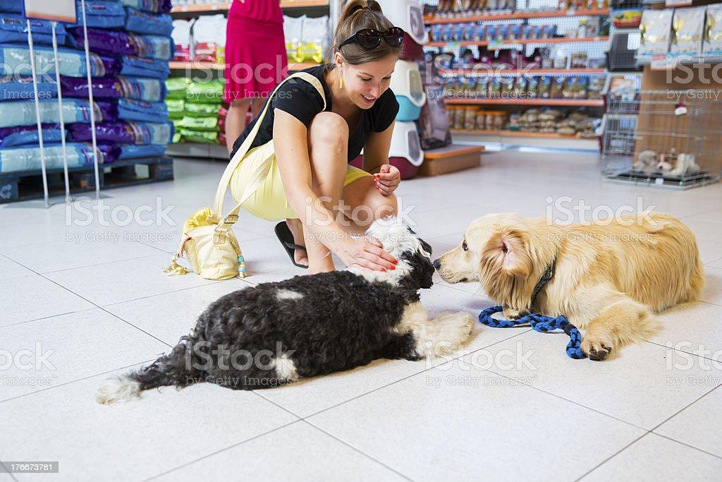 Linda Golden retriever y Terrier tibetano en la tienda de mascotas jugando foto de stock libre de derechos
