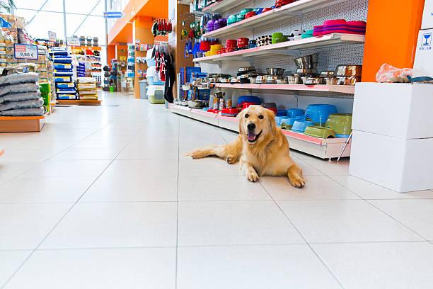 Joli Or Chien d'arrêt dans magasin pour animaux de compagnie - Photo
