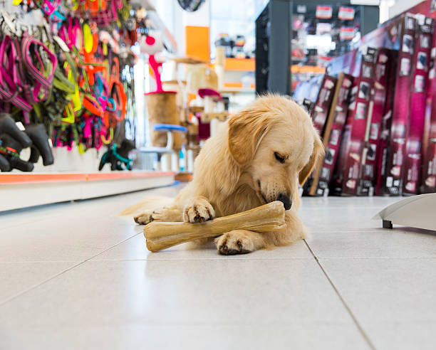 Mignon golden retriever avec gros os de magasin pour animaux de compagnie - Photo