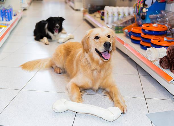 niedlich golden apportierhund mit großen hund knochen in haustier shop - hundeleinen halter stock-fotos und bilder