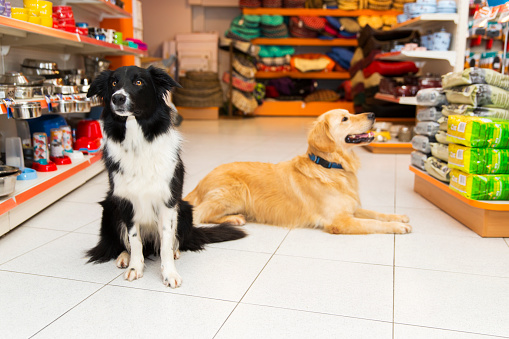 Cute Golden Retriever and Border Collie in a pet store