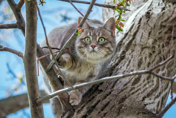 Cute gray cat sitting on a tree branch Cute gray cat with green eyes and pink nose, sitting on a tree branch, bird hunting bird hunting stock pictures, royalty-free photos & images
