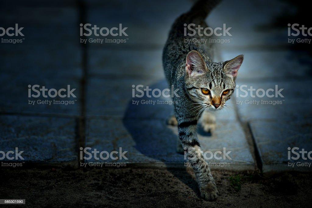 Cute gray kitten sneaks at night стоковое фото