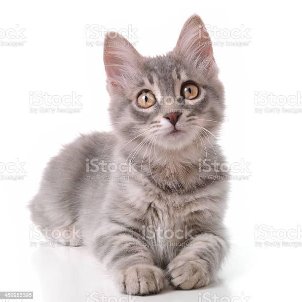 Cute gray tabby cat picture id459985395?b=1&k=6&m=459985395&s=612x612&h=i6e0ijkli2owqdcqtmmb0isjzxtjyw20iy j jcf8fu=