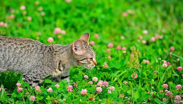 Cтоковое фото Cute gray tabby kitten on meadow
