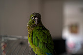 Beautiful and colorful parrot