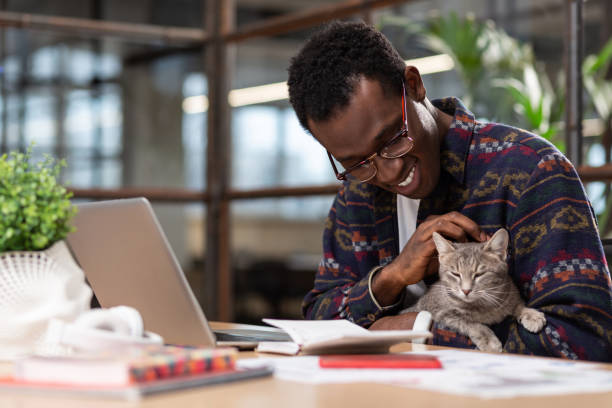 Cute grey cat distracting employees from work picture id1134074063?b=1&k=6&m=1134074063&s=612x612&w=0&h=1gxrsbj5wbitajtwgb51w 4tqgfwjauibuydcezejr4=