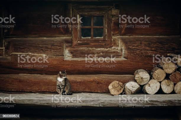Śliczny Szary Kot Siedzący W Pobliżu Starego Drewnianego Domu W Skandynawii Norweskiego Parku Narodowego Kota Domowego Na Rustykalnym Drewnianym Tle Domku - zdjęcia stockowe i więcej obrazów Kultura słowiańska