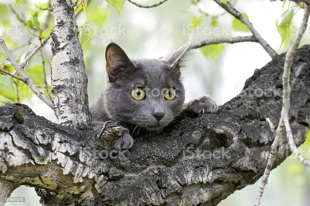 A cute grey curious cat on a tree stock photo