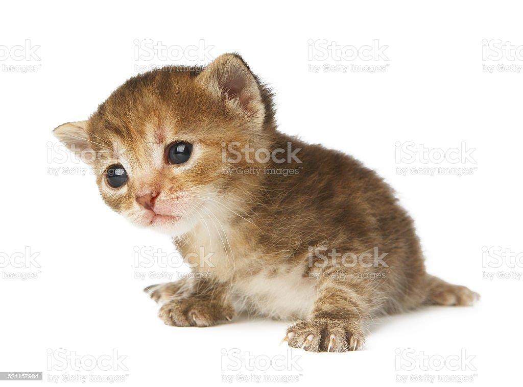 Cute grey striped kitten isolated stock photo