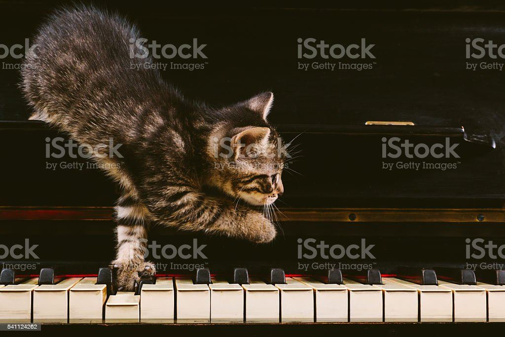 Cute grey striped kitten on piano keys. stock photo