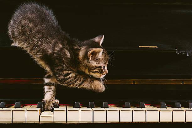 Cute grey striped kitten on piano keys. stock photo