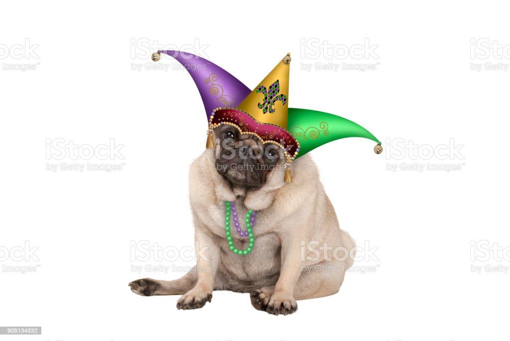 cute grumpy Mardi gras carnaval pug puppy hondje met harlequin jester hoed zitten foto