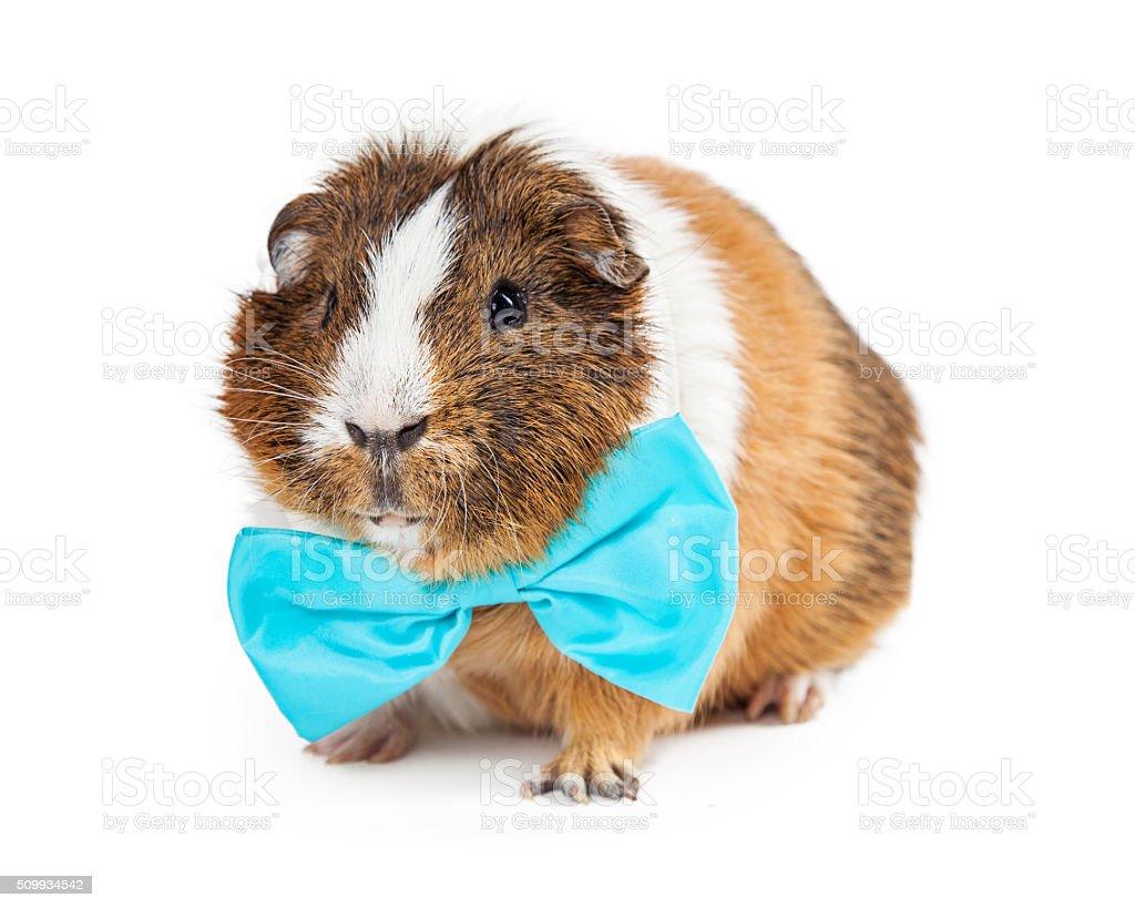 Guinea Pig Bow-tie Rabbit Bow-tie Pet Bow-tie