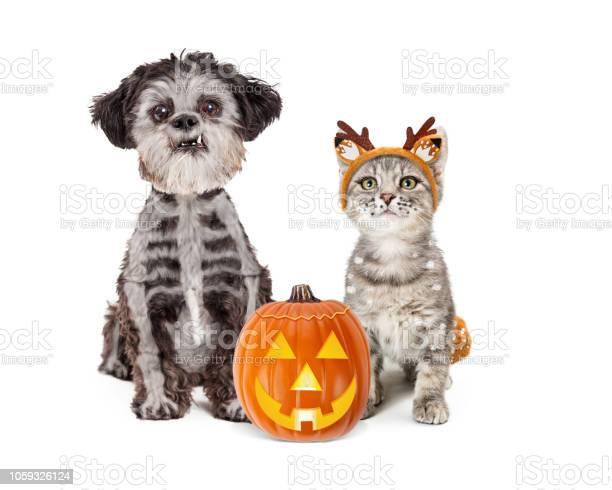 Cute halloween dog and kitten in costumes picture id1059326124?b=1&k=6&m=1059326124&s=612x612&h=wckqili2rbzscwkwf53kd30mztaux1hjz lztgtd t4=