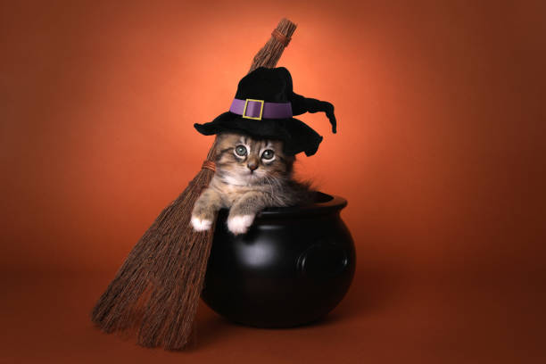 Cute Halloween Witch Themed Kitten Funny Halloween Witch Themed Kitten halloween cat stock pictures, royalty-free photos & images