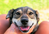 istock cute happy dog put his muzzle on hands and knees of man and faithfully looks into his eyes 1041987110
