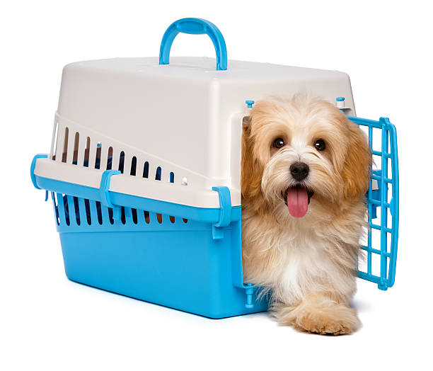 Royalty Free Dog Crate Pictures, Images and Stock Photos - iStock