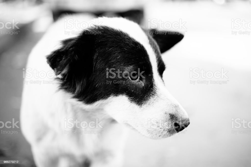 Cute Homeless Dog royalty-free stock photo