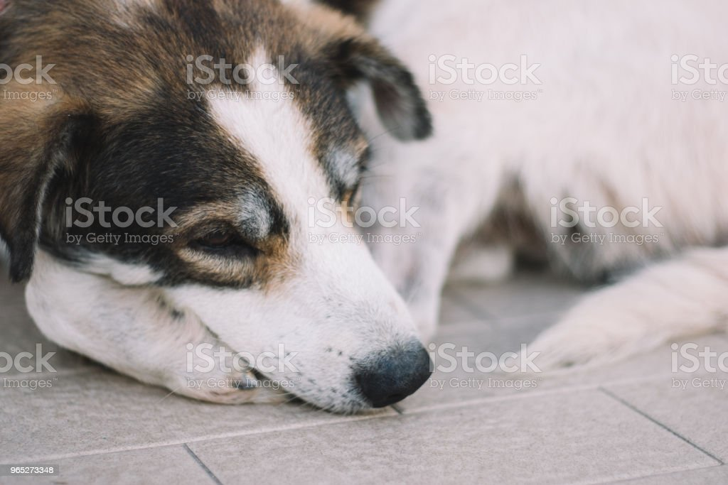 Cute Homeless Dog royalty-free stock photo