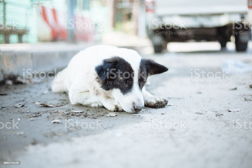 Cute Homeless Dog zbiór zdjęć royalty-free
