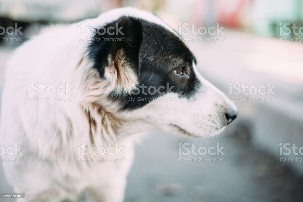 Cute Homeless Dog zbiór zdjęć royalty-free