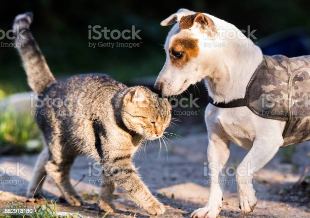 Cute jack russel dog and domestic kitten best friend picture id882913180?b=1&k=6&m=882913180&s=612x612&h=cjdcqgarivzw2slftvzb0i3xx8j04gcslb9ledokci8=