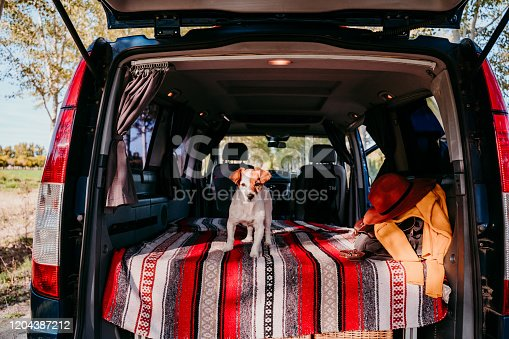 885056264 istock photo cute jack russell dog relaxing in a van. travel concept 1204387212