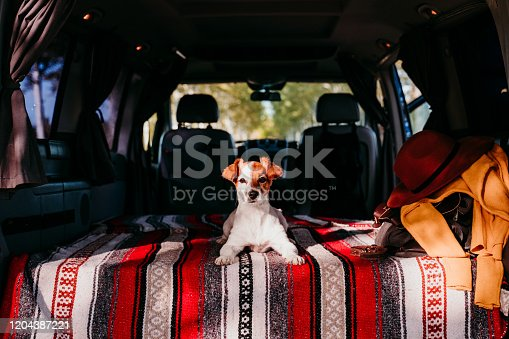 885056264 istock photo cute jack russell dog relaxing in a van. travel concept 1204387221