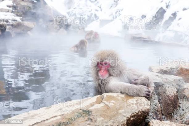 Cute japanese snow monkeys sitting in a hot spring nagano prefecture picture id1044969080?b=1&k=6&m=1044969080&s=612x612&h=udwmtsg5uumch8ovytvummkm9n28qssidwhsenjz8a0=