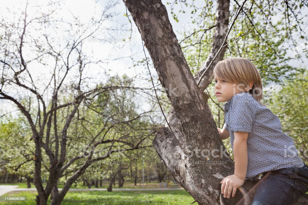 Cute kid boy sitting on the big tree in the park on a spring or...