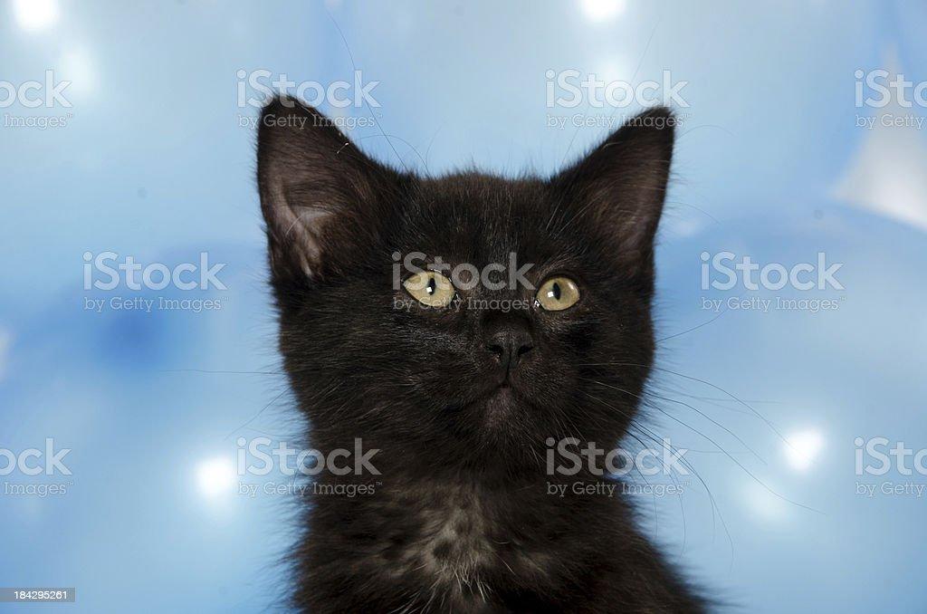 Cute kitten and blue balloons stock photo