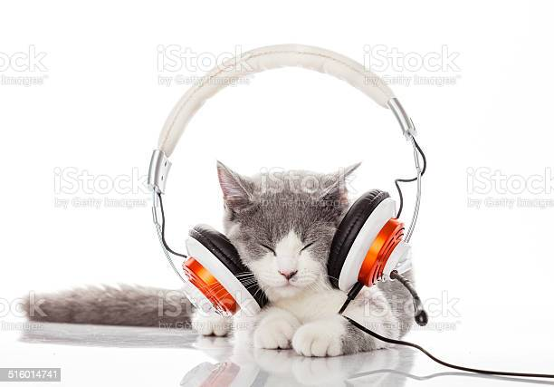 Cute kitten and headphones picture id516014741?b=1&k=6&m=516014741&s=612x612&h=3k hpvvyqyg28nomzx0ouxsmvdbpvgpqdyw7o0x9ziy=