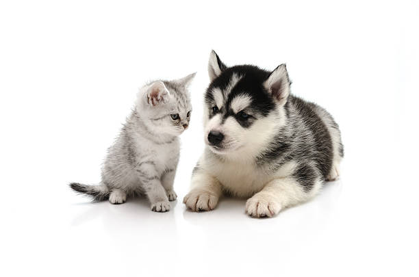 Cute kitten and puppy on white background picture id465028294?b=1&k=6&m=465028294&s=612x612&w=0&h=hpicffbobrqzjsz8xohrskabgranblmmc omubfjhkg=