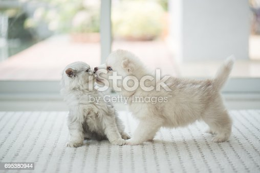 istock Cute kitten and puppy playing 695380944