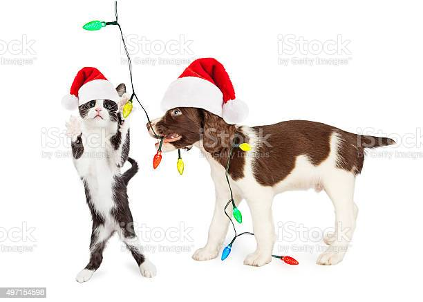 Cute kitten and puppy playing with christmas lights picture id497154598?b=1&k=6&m=497154598&s=612x612&h=td3dxzcfm8x79bbaeo1 vrgla7zwuhvlcpy2jdkjy2e=