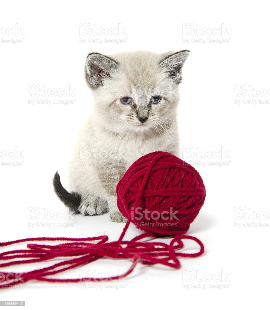 Cute kitten and red yarn royalty-free stock photo