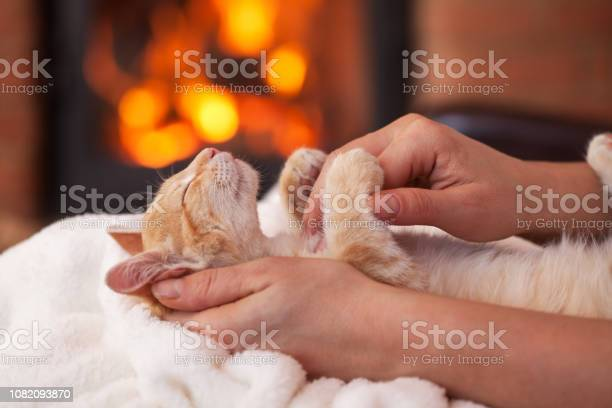 Cute kitten enhoy petting from owner lying in woman hands shallow picture id1082093870?b=1&k=6&m=1082093870&s=612x612&h=0ebtkx8wzhkhah9megsrshkxjo7y8 j3 j ethebo0w=