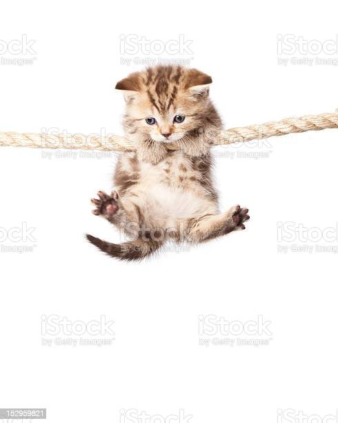 Cute kitten hanging on to rope isolated on white picture id152959821?b=1&k=6&m=152959821&s=612x612&h=21o  u7gmj7oujoogb1merkl2akgwnzk1wxf3j8a3za=