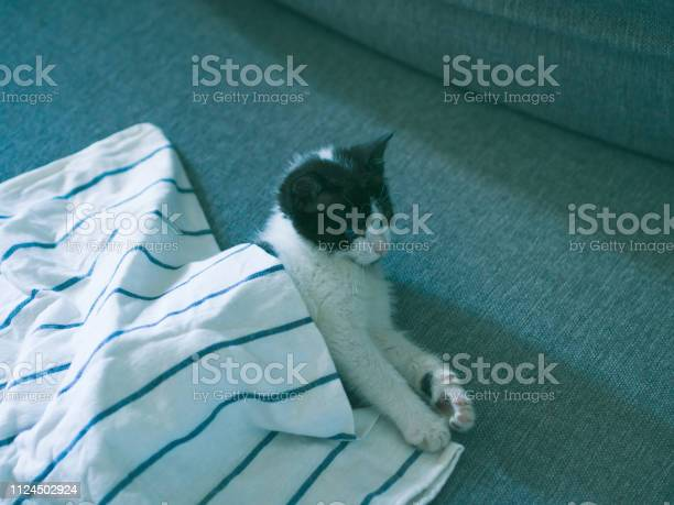 Cute kitten having rest on sofa picture id1124502924?b=1&k=6&m=1124502924&s=612x612&h=jf hx bavmtdhxxsb7zzyr5pjlbrbcaimdopaxpbmzw=