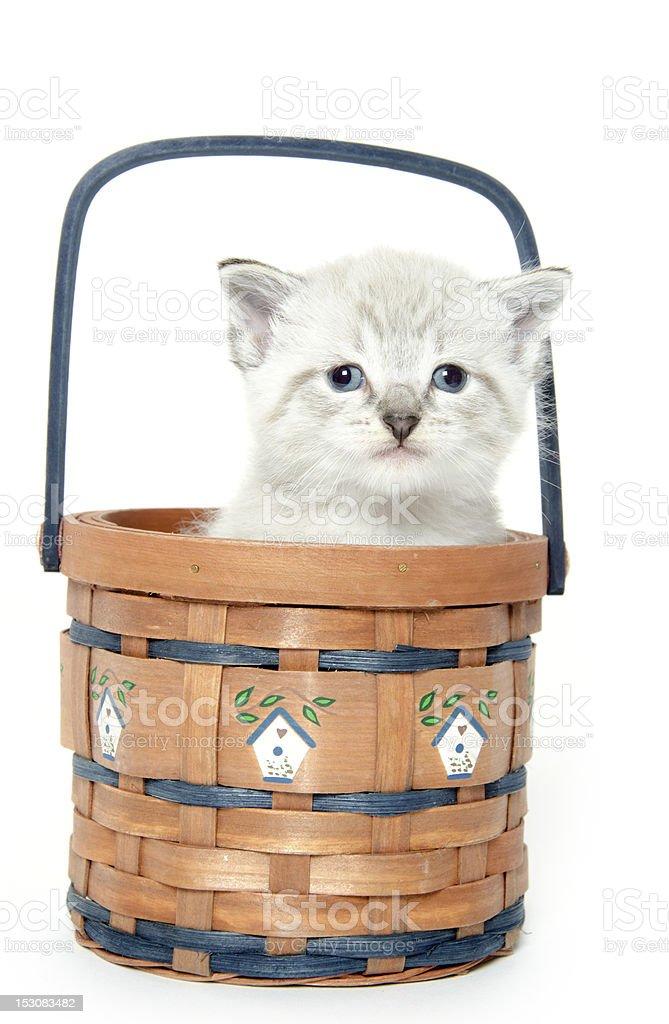 Cute kitten in a basket stock photo