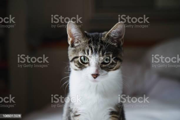 Cute kitten in a bed picture id1069312028?b=1&k=6&m=1069312028&s=612x612&h=zv6vmtwpv7vxcibrebnpe2jvyycqifjj8rdfe0fk7no=